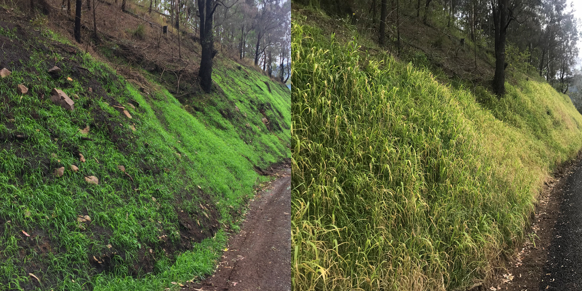 Steep slopes no match for revegetation collaboration