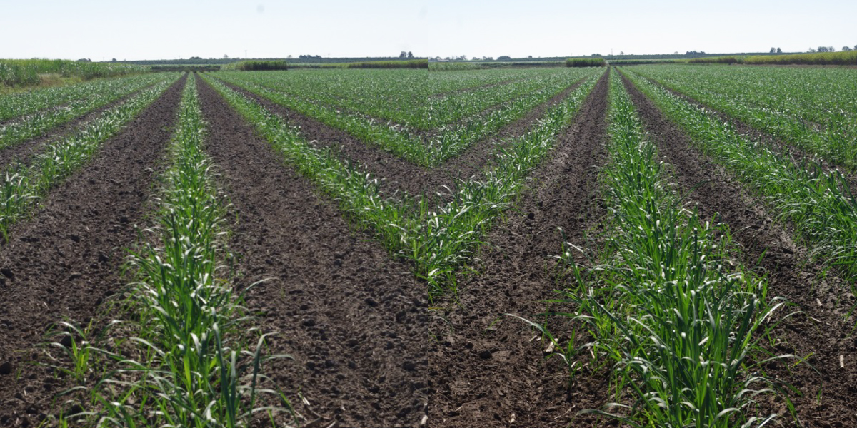 Agricultural Trial Nets Bigger Harvest Using Soil Conditioner