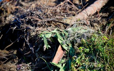 "NuGrow's recycling of green waste helps ""keep Australia beautiful"""