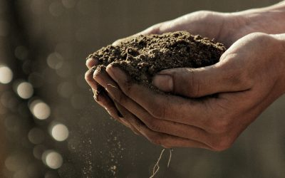 How compost is crucial to soil regeneration